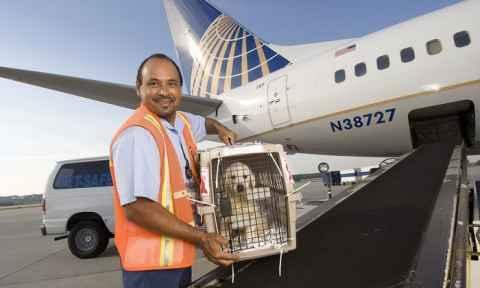 PetSafe - Chương trình vận chuyển động vật đặc biệt