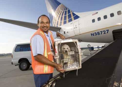 PetSafe - Chương trình vận chuyển động vật đặc biệt của United Airlines