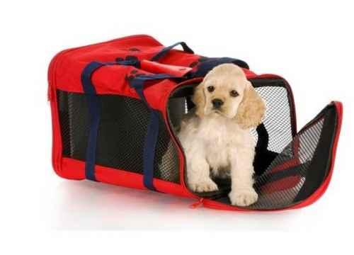 Quy định của United Airlines về việc mang thú cưng lên máy bay