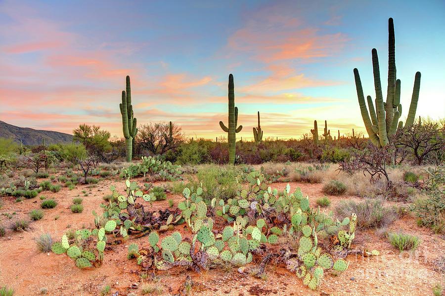 Vườn quốc gia Saguaro