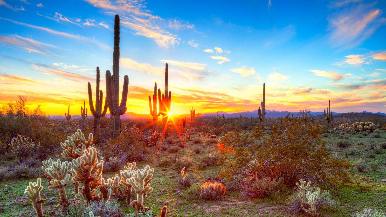 Sa mạc Sonora